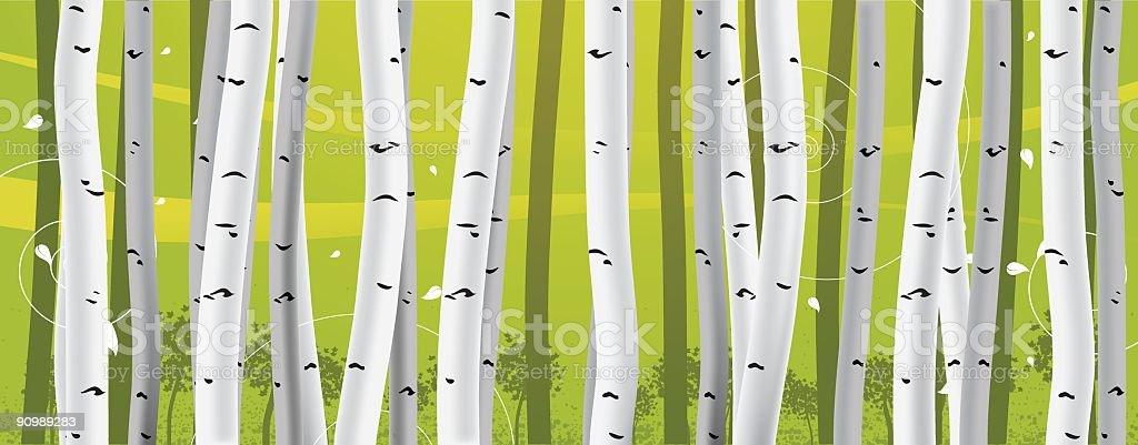 Birch Trees vector art illustration