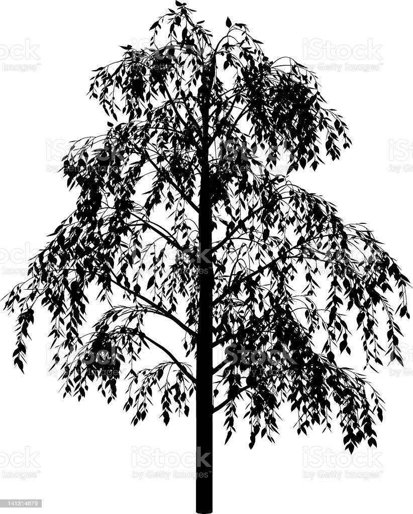 birch royalty-free stock vector art