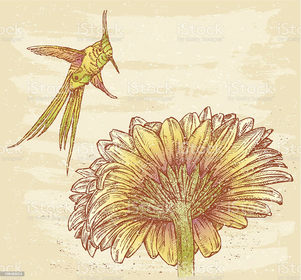 Bird and flower vector art illustration