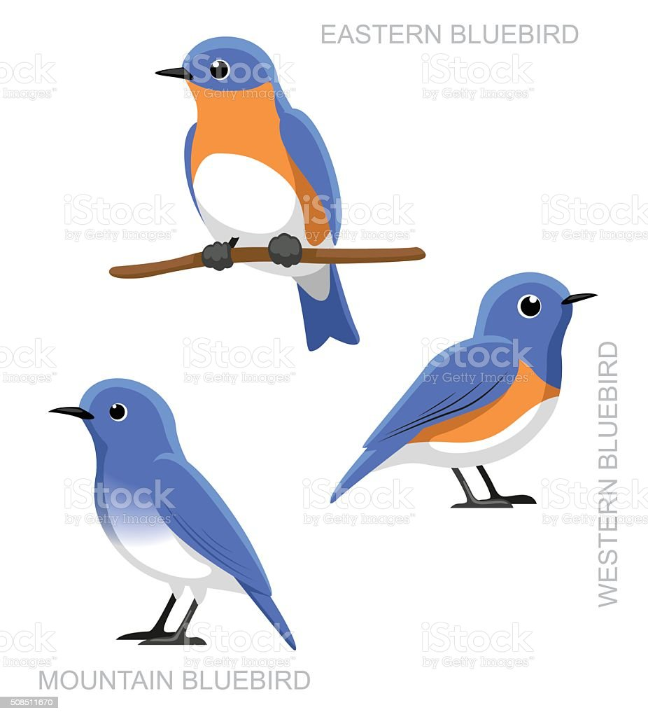 Bird Bluebird Set Cartoon Vector Illustration vector art illustration
