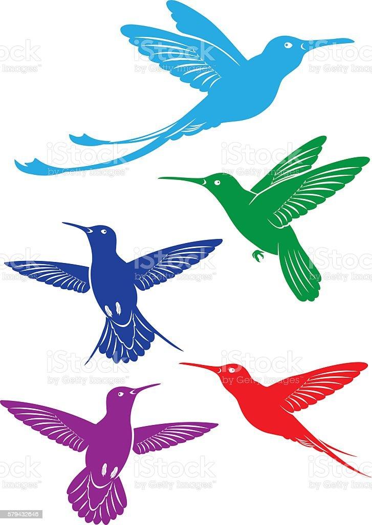 bird colibri vector art illustration