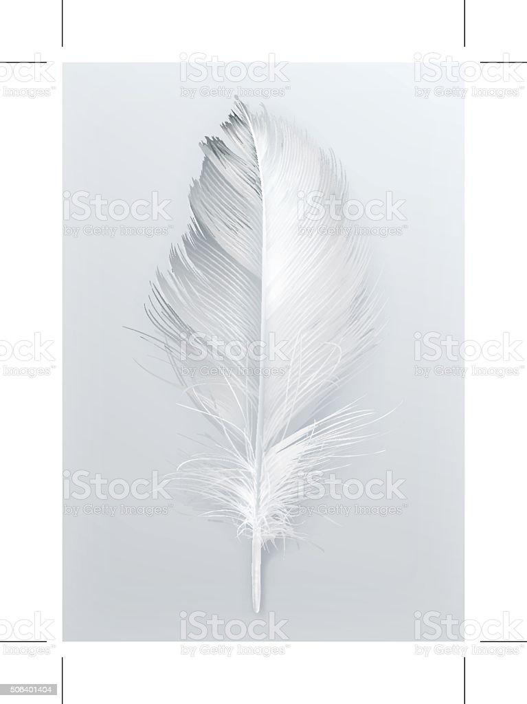 Bird feather vector icon vector art illustration
