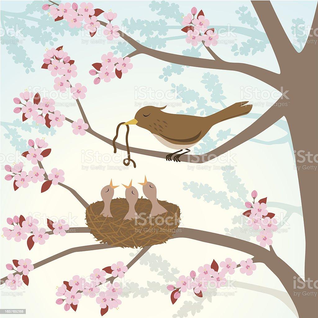Bird feeding chicks in a cherry tree vector art illustration