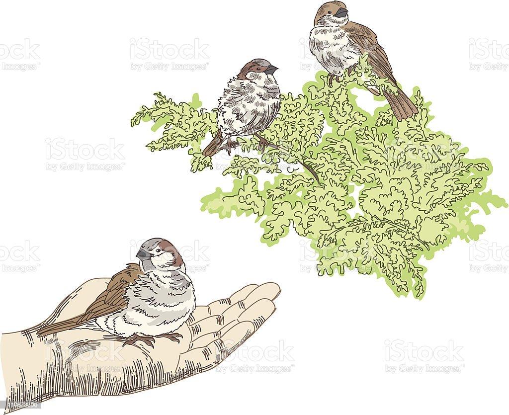 Bird In The Hand royalty-free stock vector art
