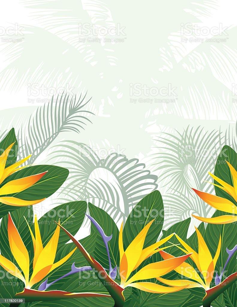 Bird of Paradise Background royalty-free stock vector art