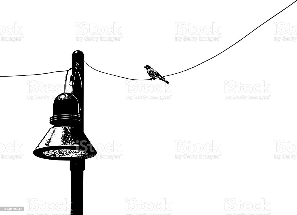 Bird on a wire chirping. vector art illustration
