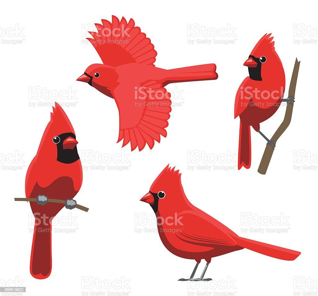 Bird Poses Northern Cardinal Vector Illustration vector art illustration