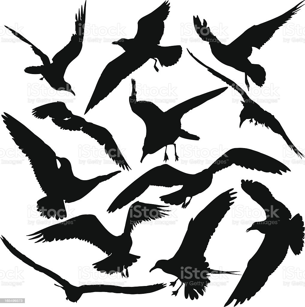 bird silhouette set stock vector art 165499373 istock