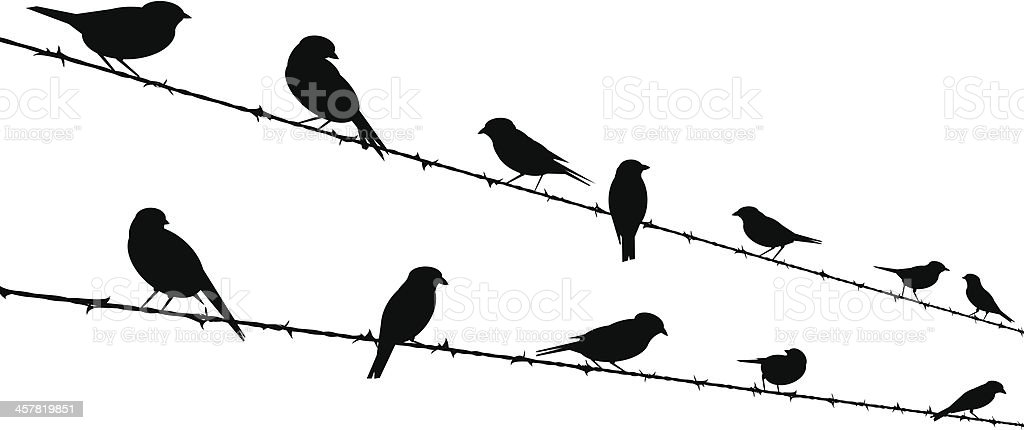 bird silhouettes on barb wire vector art illustration