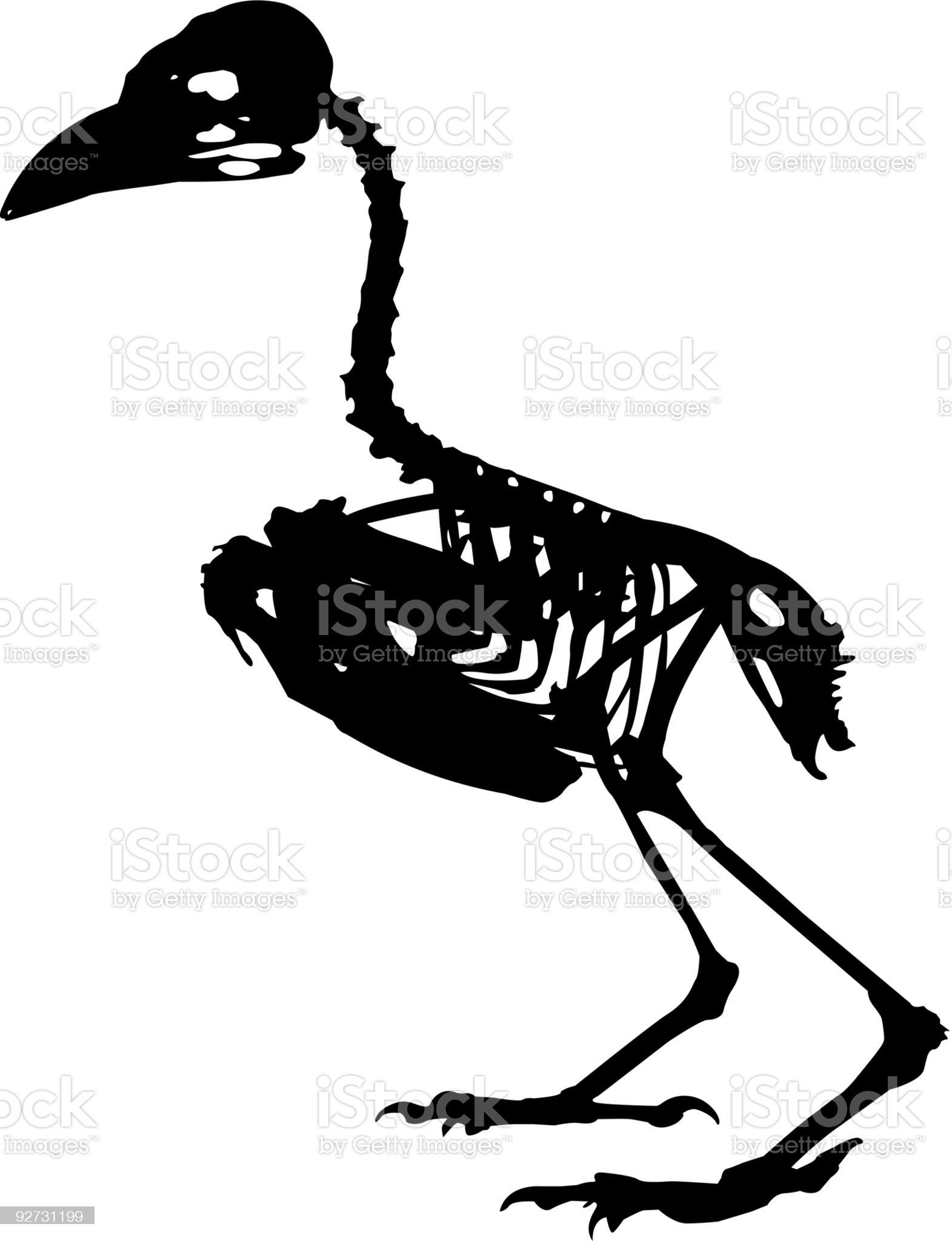 bird skeleton royalty-free stock vector art