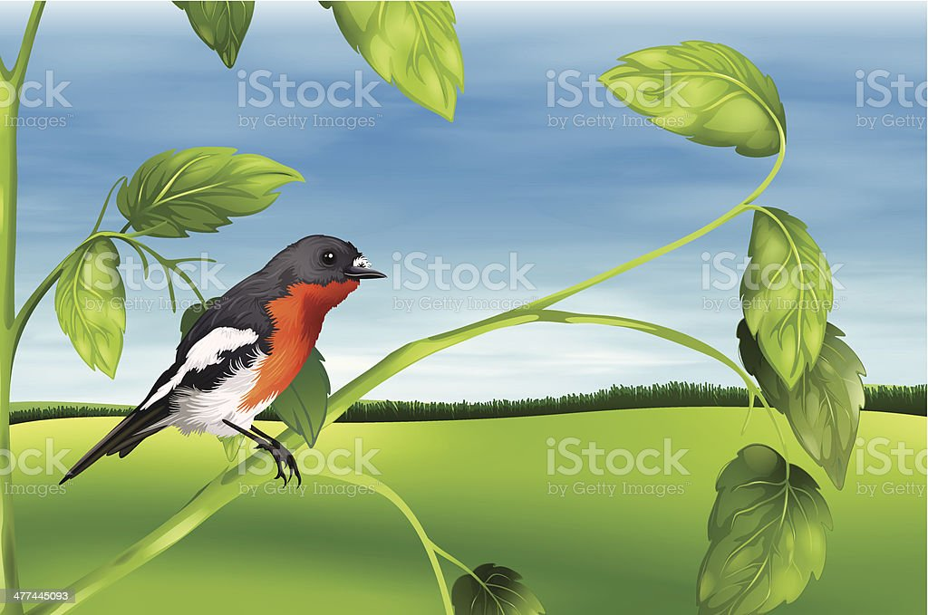 Bird vector art illustration