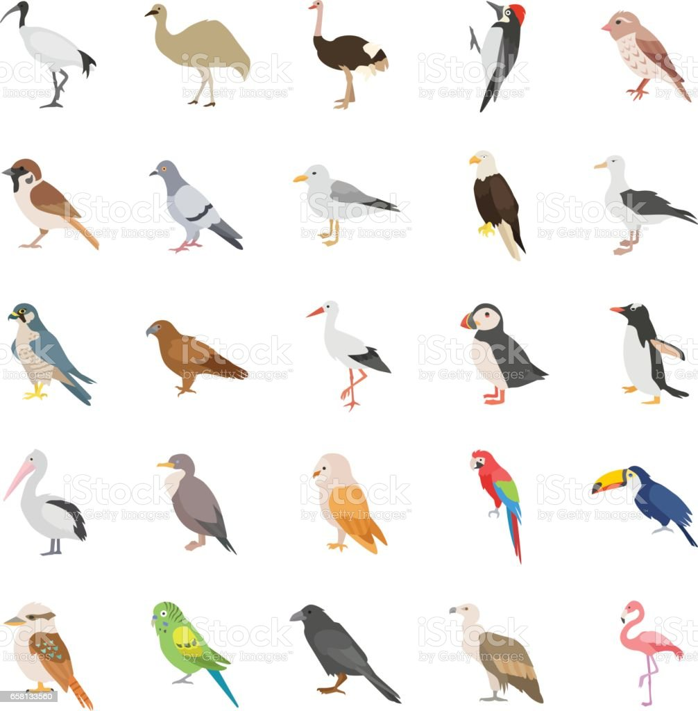 Birds color vector icons vector art illustration