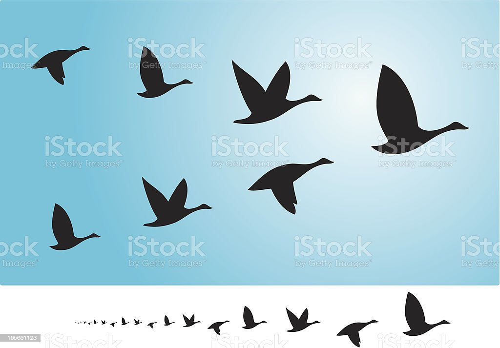 Birds flying in formation vector art illustration