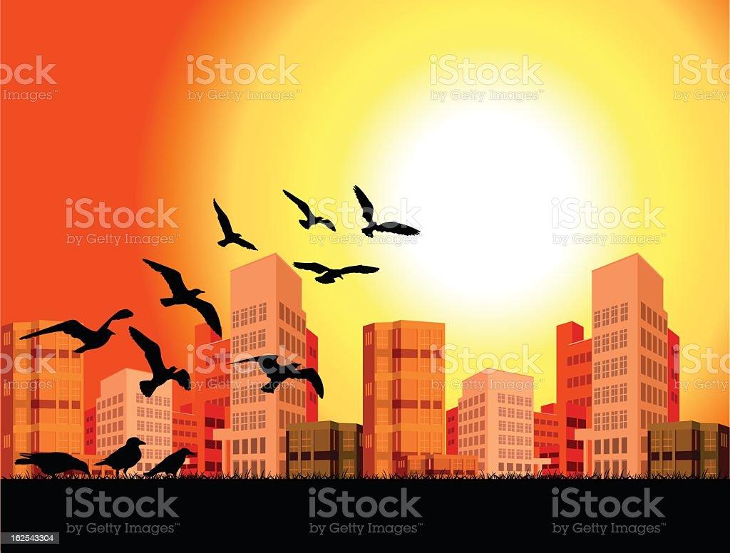 birds flying vector art illustration