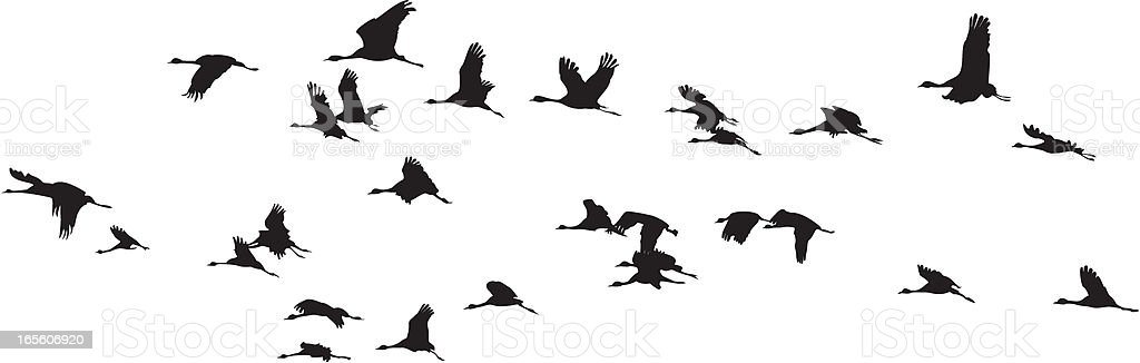 Birds Group :: Balck and white royalty-free stock vector art