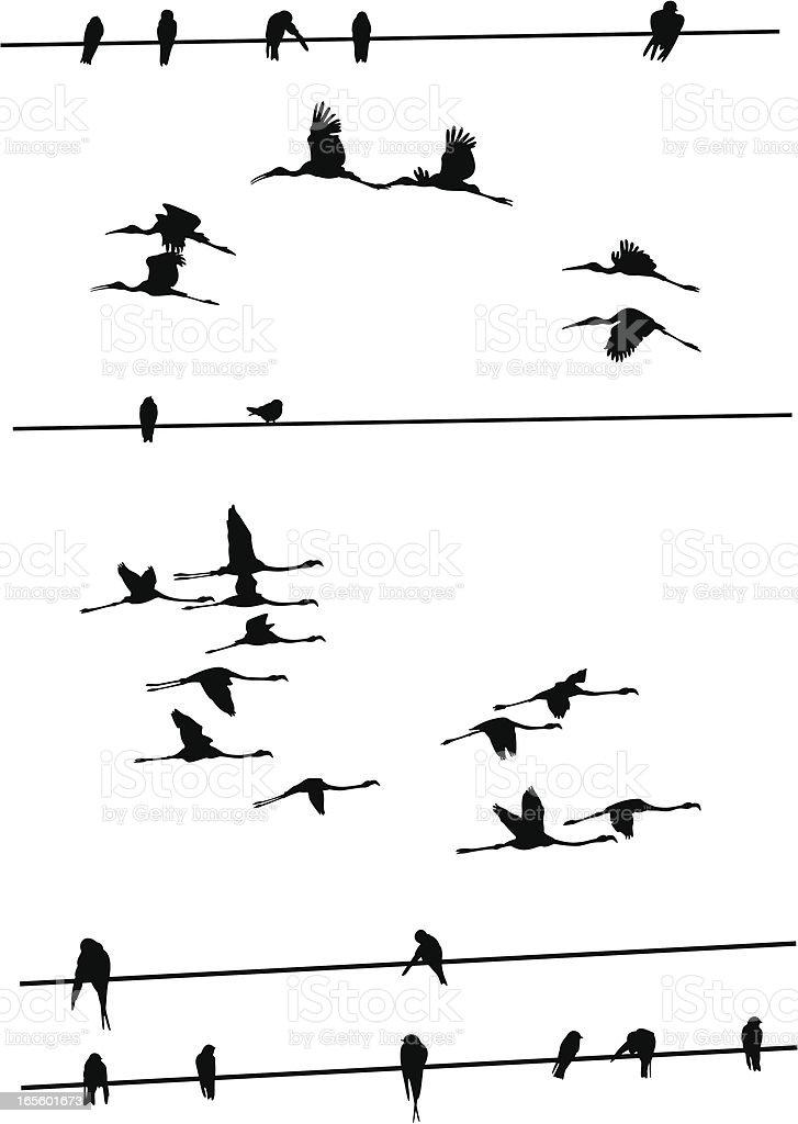 Birds on Wires vector art illustration