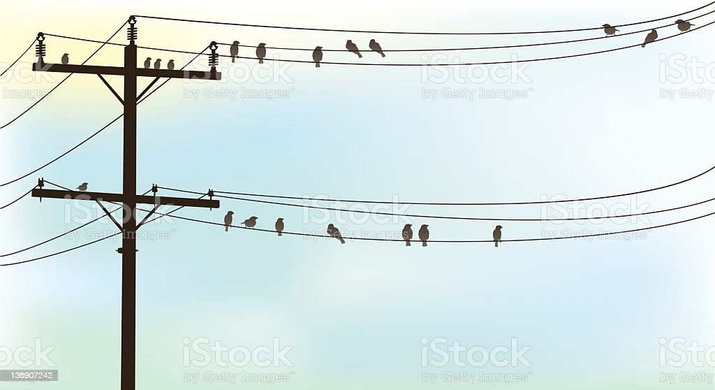 Birds Perched On A Old Telephone Wire Pastel Sky Background stock photo