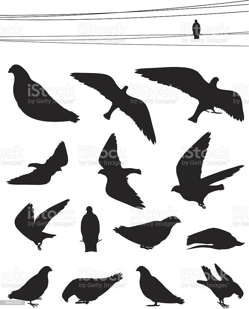 Birds - Pigeons vector art illustration