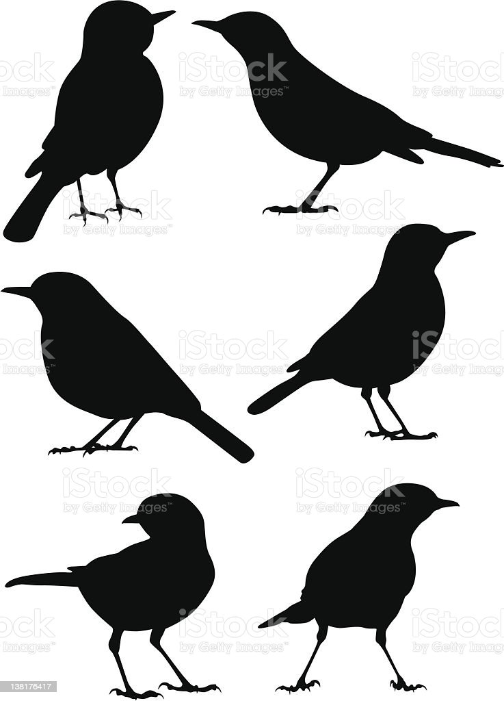 Birds Silhouette - 6 different vector illustrations royalty-free stock vector art
