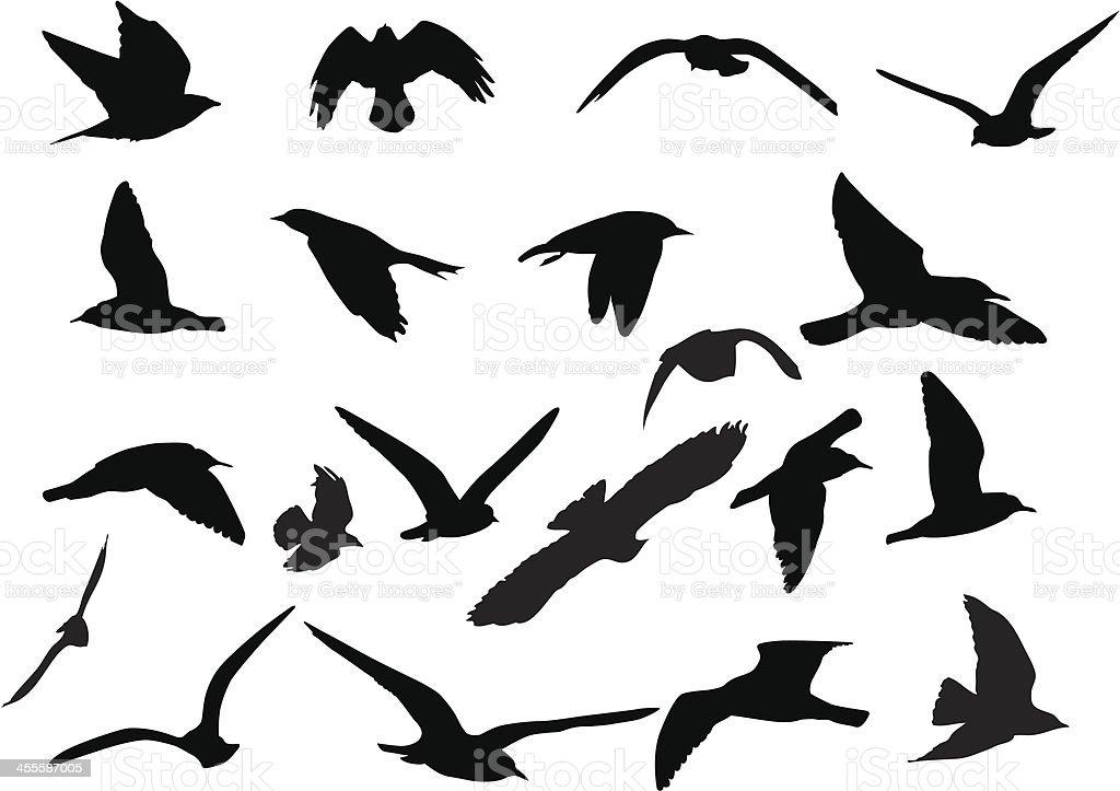 Birds Silhouettes vector art illustration