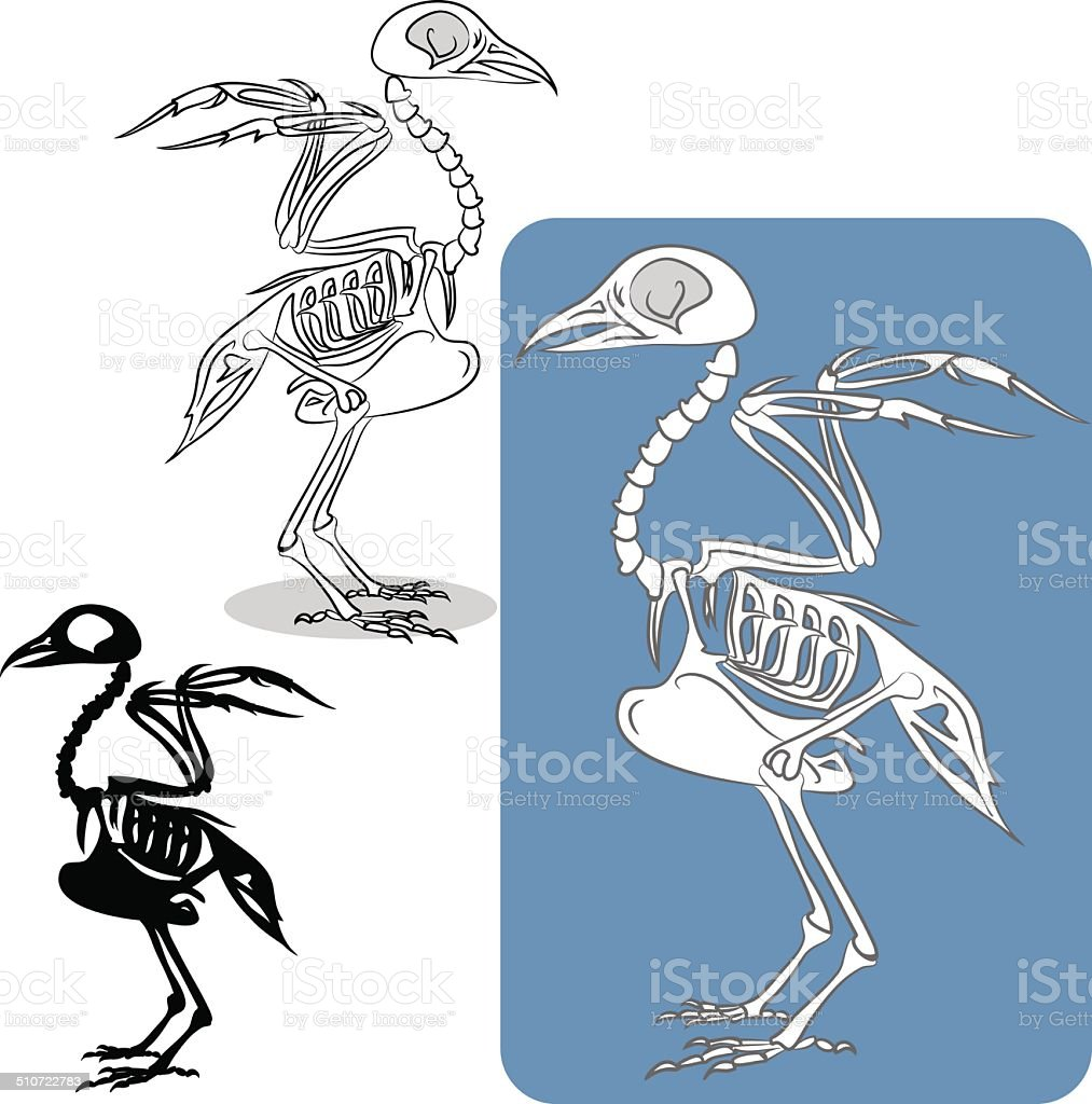 bird's skeleton vector art illustration