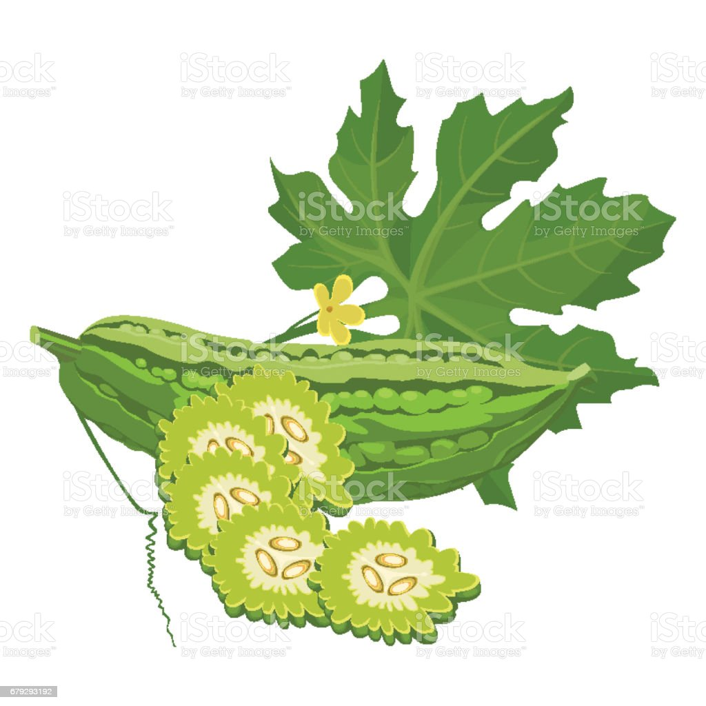 Bitter melon gourd squash or balsam-pear whole and sliced vector art illustration