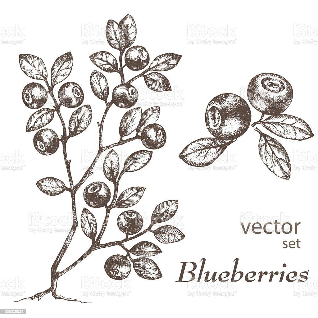 Bl-1 vector art illustration