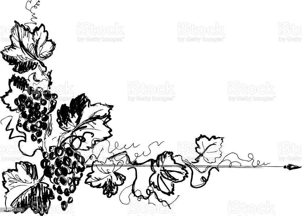 Black and white border illustration of grapes and leaves royalty-free stock vector art