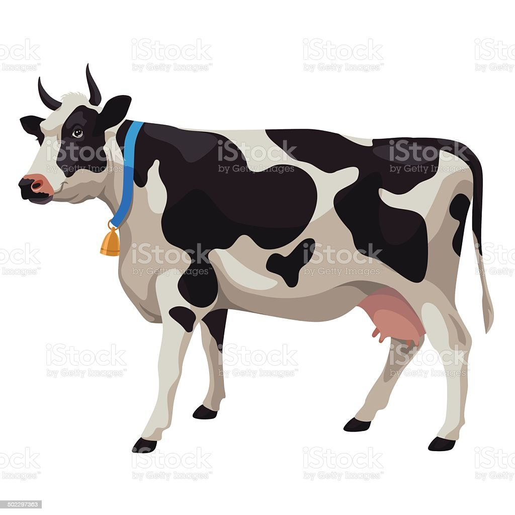 Black and white cow, side view, isolated vector art illustration