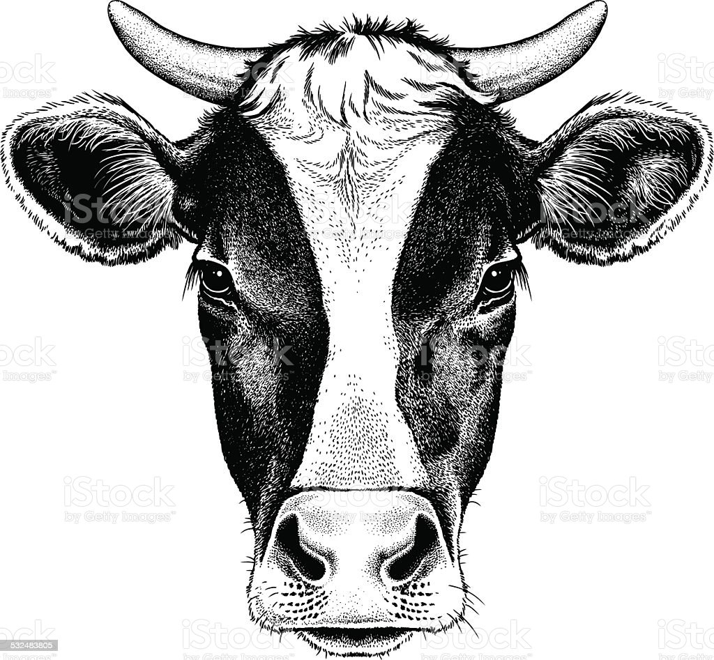 Black and white cow with horns vector art illustration