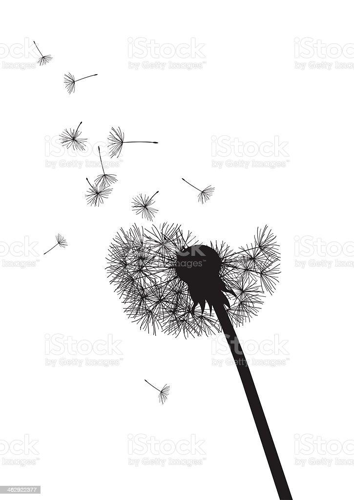 black and white dandelion with flying seeds vector art illustration