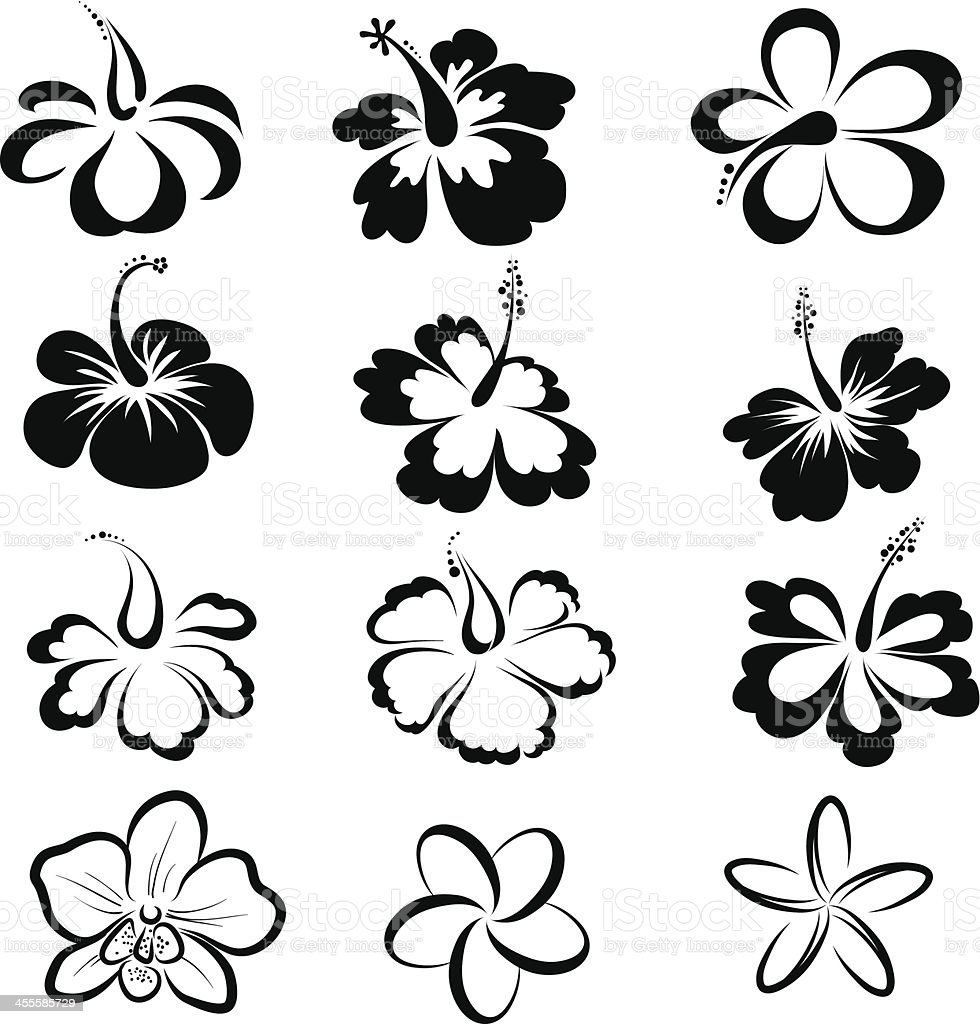 Black and white drawings of tropical flowers vector art illustration