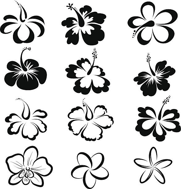 Tropical Flower Line Drawing : Frangipani clip art vector images illustrations istock