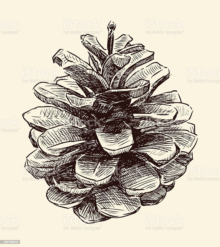 Black and white illustration of a pine cone vector art illustration