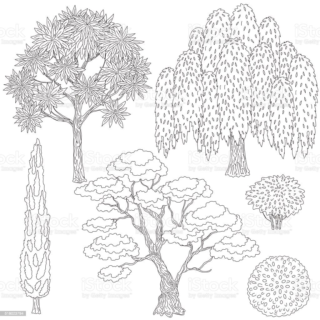 Black and white outlines trees and bushes. vector art illustration