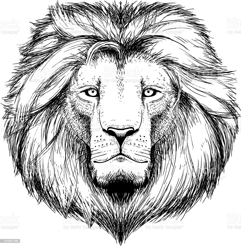 A black and white sketch of a lion's head royalty-free stock vector art
