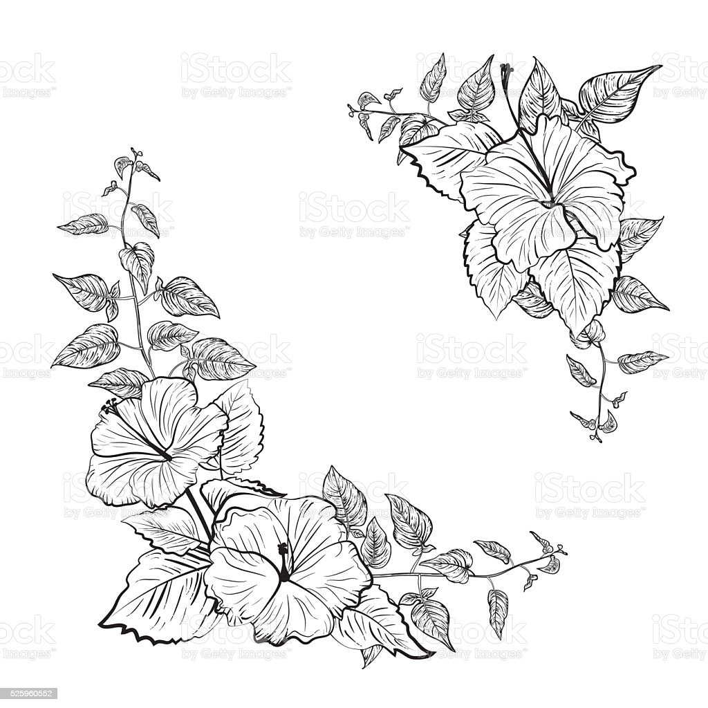 Black and White Tropical Hibiscus Floral Frame vector art illustration