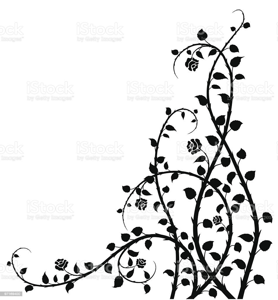 Black and white vector image of a rose bush vector art illustration