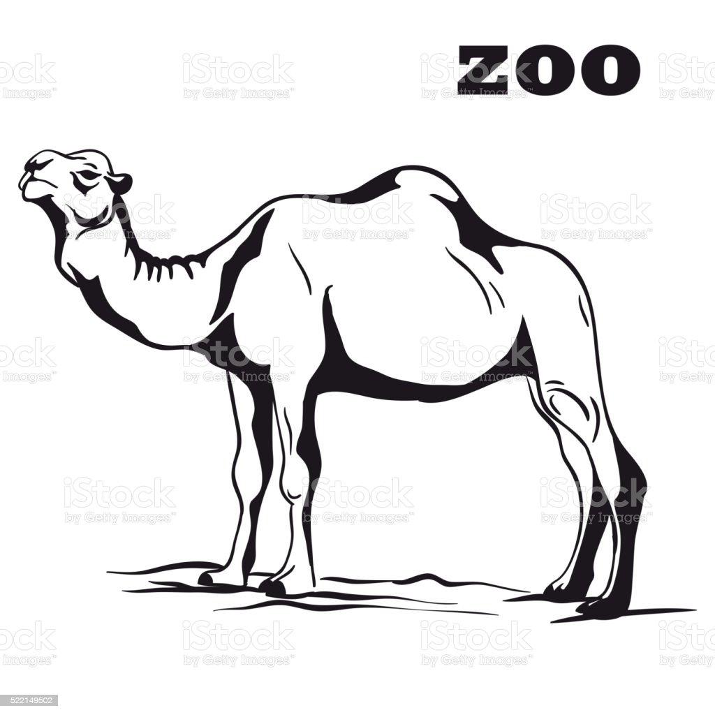 black arabian camel vector art illustration