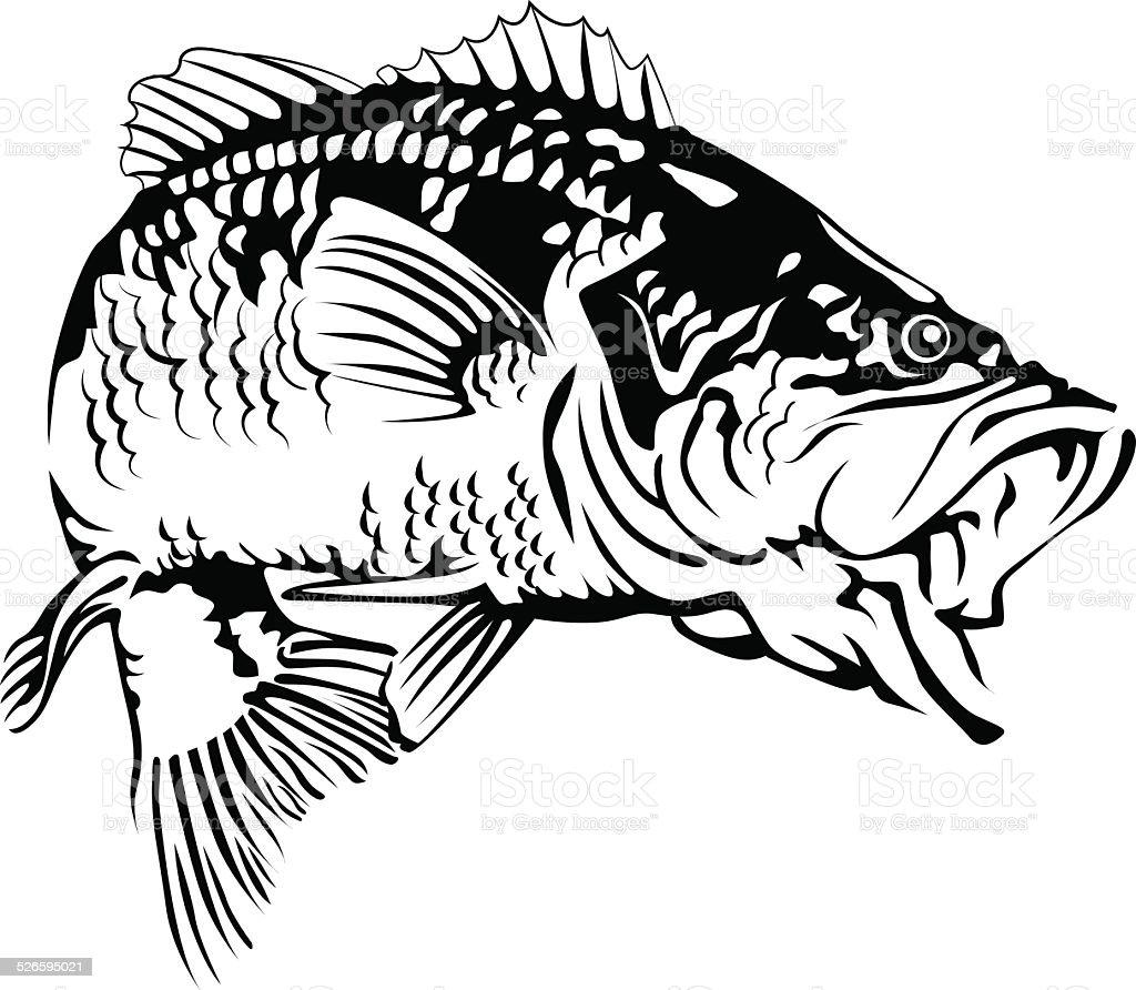 Line Art Resolution : Black bass stock vector art istock