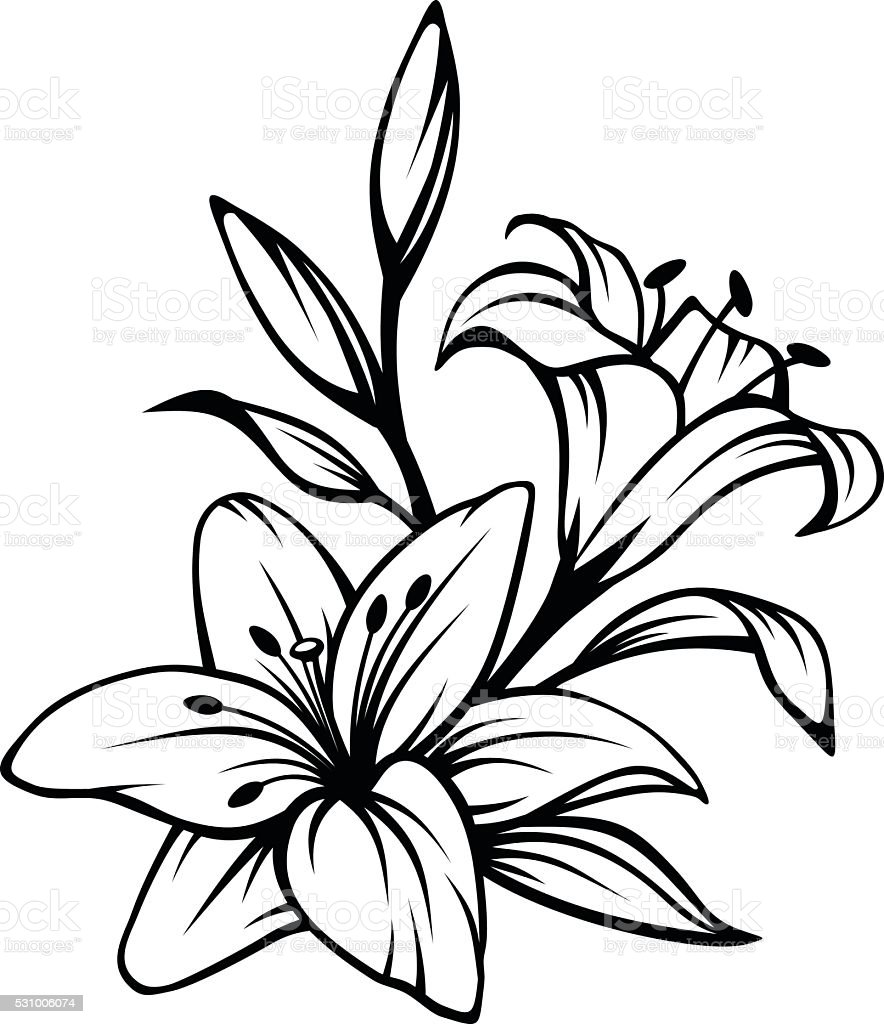 Black contour of lily flowers. Vector illustration. vector art illustration