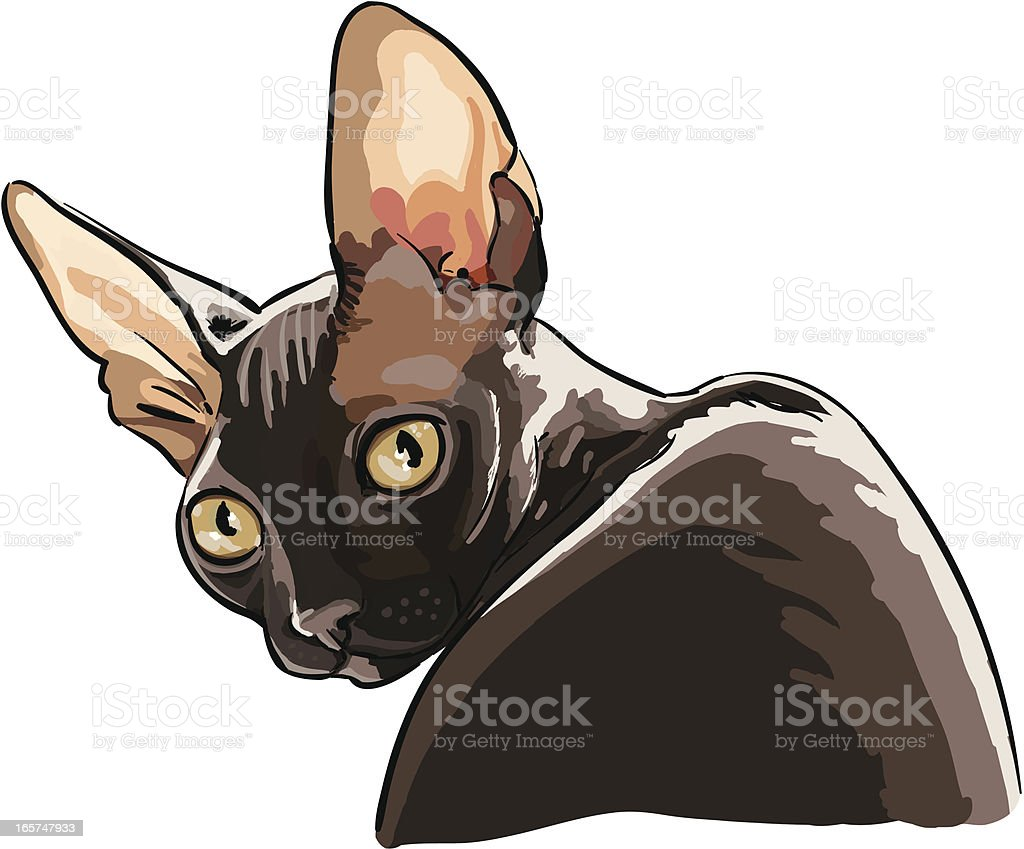 Black cornish rex cat vector art illustration