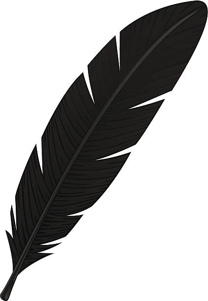 Eagle Feather Clip Art, Vector Images & Illustrations - iStock
