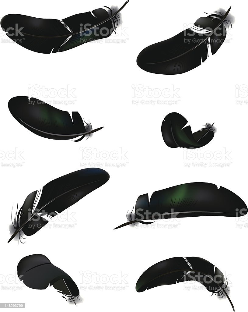 Black feathers royalty-free stock vector art