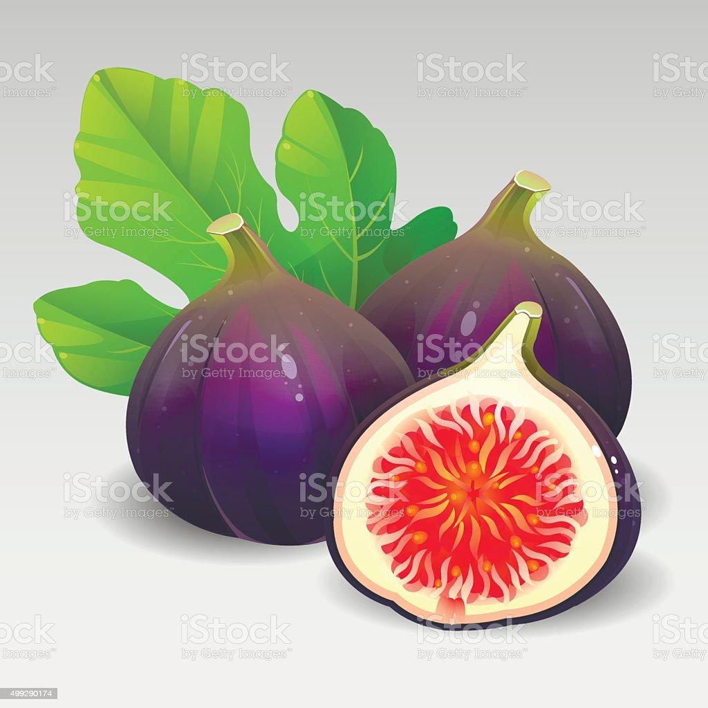 Black figs vector art illustration