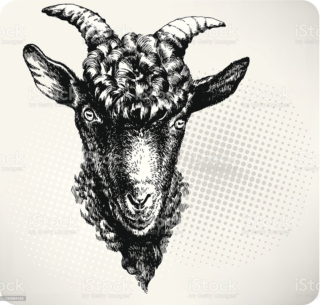 Black goat hand drawn. Vector illustration royalty-free stock vector art