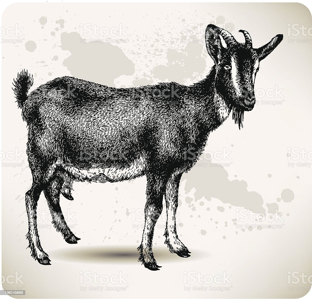 Black goat with horns, hand-drawing. Vector illustration. royalty-free stock vector art