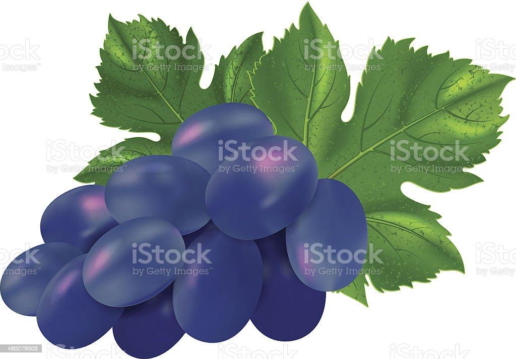 Black grapes royalty-free stock vector art