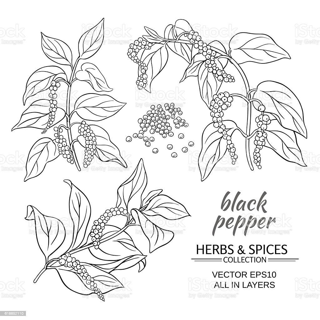 black ground pepper vector art illustration