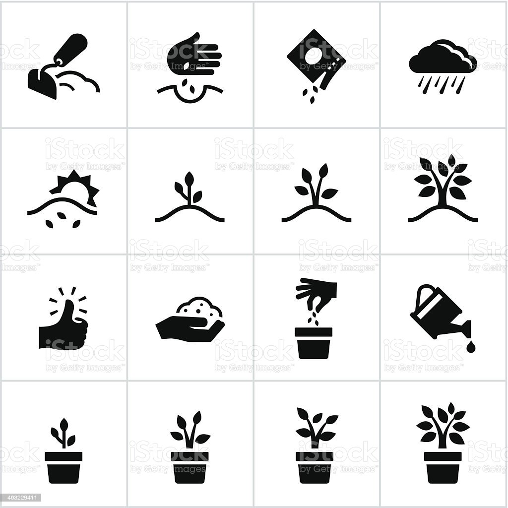 Black Growing Process Icons vector art illustration